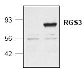 AP00088PU-N - RGS3