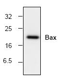 AM00183PU-N - Bax