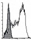 DDX0081P-50 - CD1a