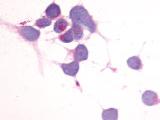 SP4116P - CD312 / EMR2