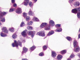 SP4541P - XPR1