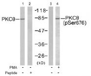 AP02534PU-S - PRKCQ / PRKCT