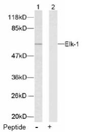 AP02548PU-S - ELK1
