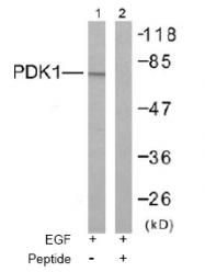 AP02549PU-S - PDPK1