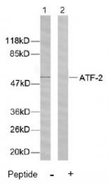 AP02571PU-N - ATF2