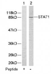 AP02585PU-S - STAT1