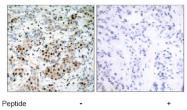 AP02593PU-S - CREB1