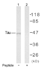 AP02629PU-S - MAPT / TAU