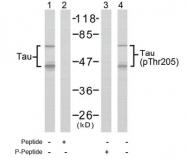 AP02400PU-S - MAPT / TAU