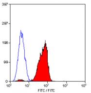 SM1819P - CD46 / MCP