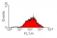 SM1778F - CD218a / IL18R1