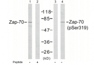 AP02441PU-S - ZAP70