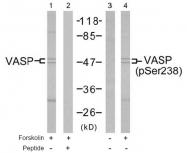 AP02690PU-S - VASP