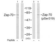 AP02691PU-S - ZAP70