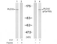 AP02700PU-N - PLCG2