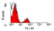 SM1303F - B-Cells