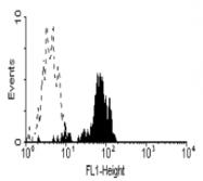 SM1152P - CD64 / FCGR1A