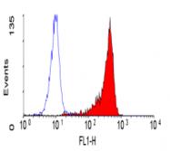 SM1137P - CD53