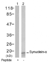 AP02750PU-S - Alpha-Synuclein / SNCA