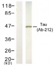 AP02751PU-S - MAPT / TAU