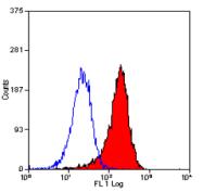 BM4008LE - Macrophage F4/80 antigen