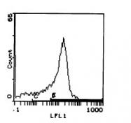 CL029P - CD45 / LCA
