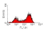 CL116F - Endothelium