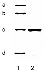 BA1008 - Cytokeratin 18