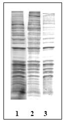 AM00120PU-N - Phosphothreonine