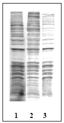 AM00121PU-N - Phosphothreonine