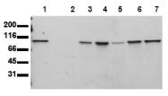 AM00152PU-N - STAT6
