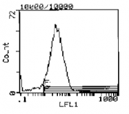 CL023B - CD44