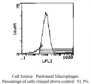CL116B - Endothelium