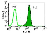 AM05349PU-L - CD181 / IL8RA