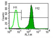 AM05349PU-N - CD181 / IL8RA