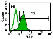 AM05350PU-L - CD182 / IL8RB