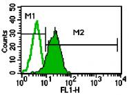 AM05350PU-N - CD182 / IL8RB
