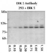 AP05269PU-N - MAPK7 / ERK5