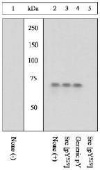 AP05275PU-N - SRC1