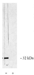 AP05054PU-N - PPP6C