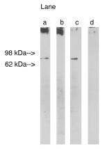 AP05286PU-N - LASS1