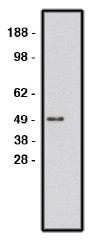 AP05287SU-N - ROBO1