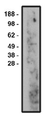 AP05301SU-N - SMPD3