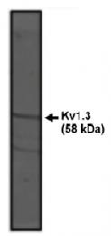 AP05124PU-N - KCNA3