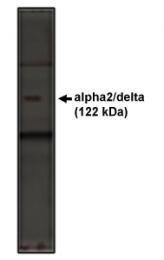 AP05136PU-N - CACNA2D1
