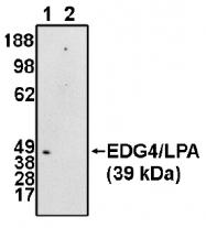 AP05151PU-N - EDG4 / LPAR2