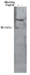 AP05168PU-N - SGPL1