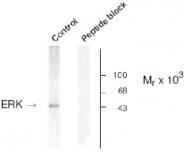 AP05182PU-N - MAPK3 / ERK1