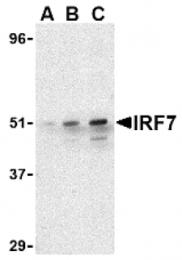 AP05221PU-N - IRF7