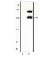 AM05271PU-N - TCF4
